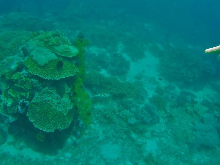 Korall 2