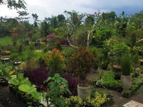 Kertészet, bárcsak válogathatnék itt egy kicsit