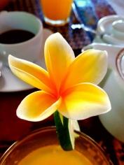 Mindenhol ilyen virág van :-)