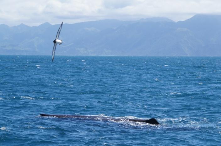 A háta, felette egy albatrosszal